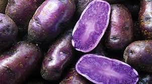kentang ungu